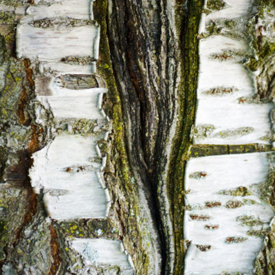 Stock Image - Tree Bark - Sheri Lossing, photographer